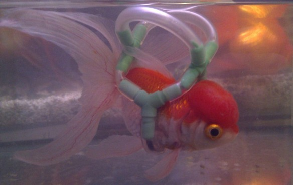 peixe-g
